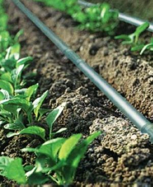 Datta Drip Irrigation